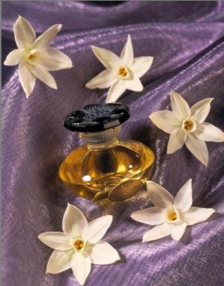 El hilo del Perfume Narcisse1